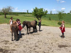 Familie opstellingen met paarden