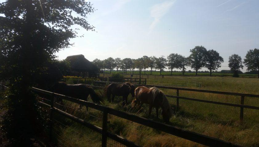 Paardencoach Vechtdal Overijssel