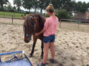 Traumaverwerking met paarden