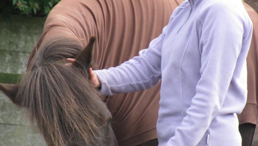 mindfulness met paarden