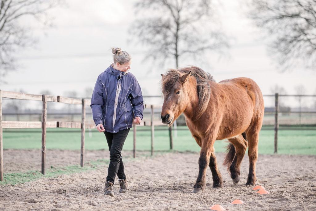 Coaching met paarden Hardenberg