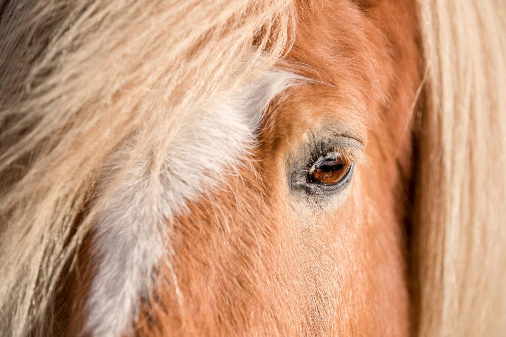 ervaringen paardencoaching