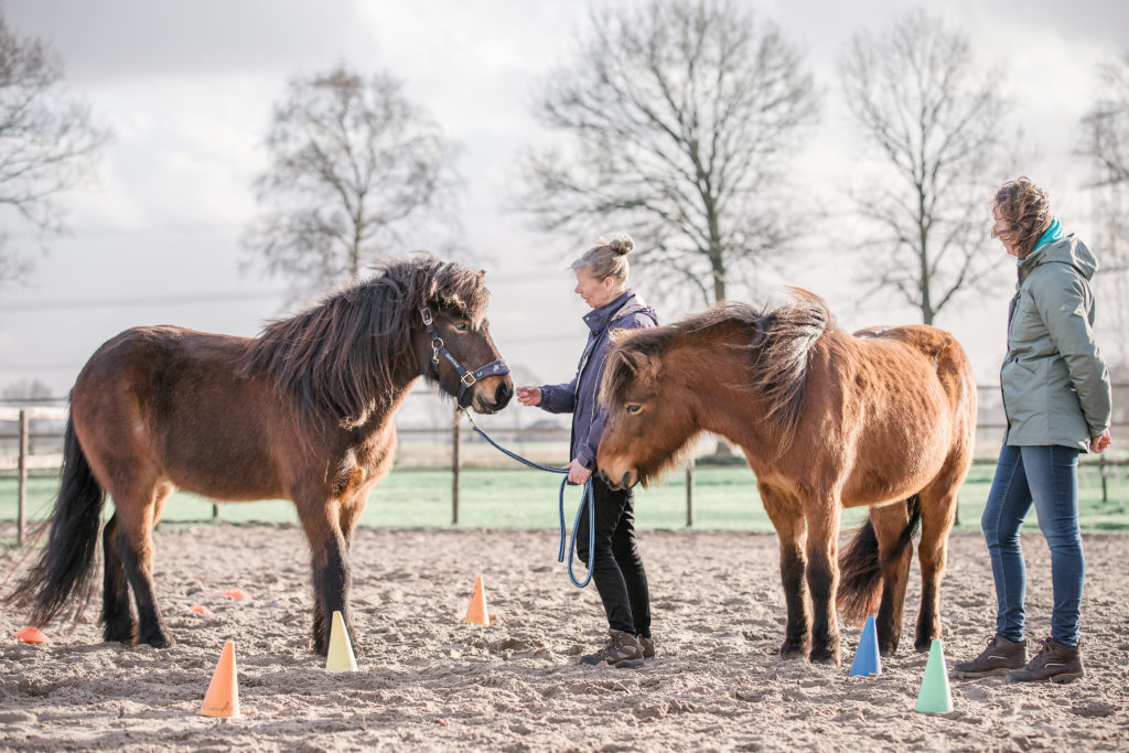 opleiding paardencoach