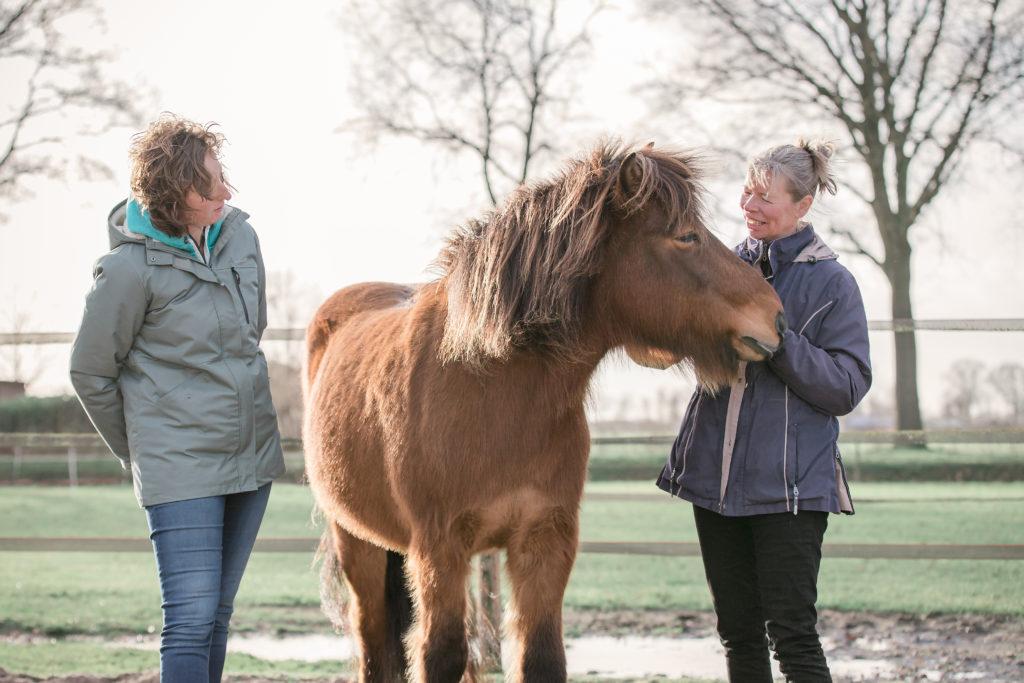 paardencoach Dalfsen