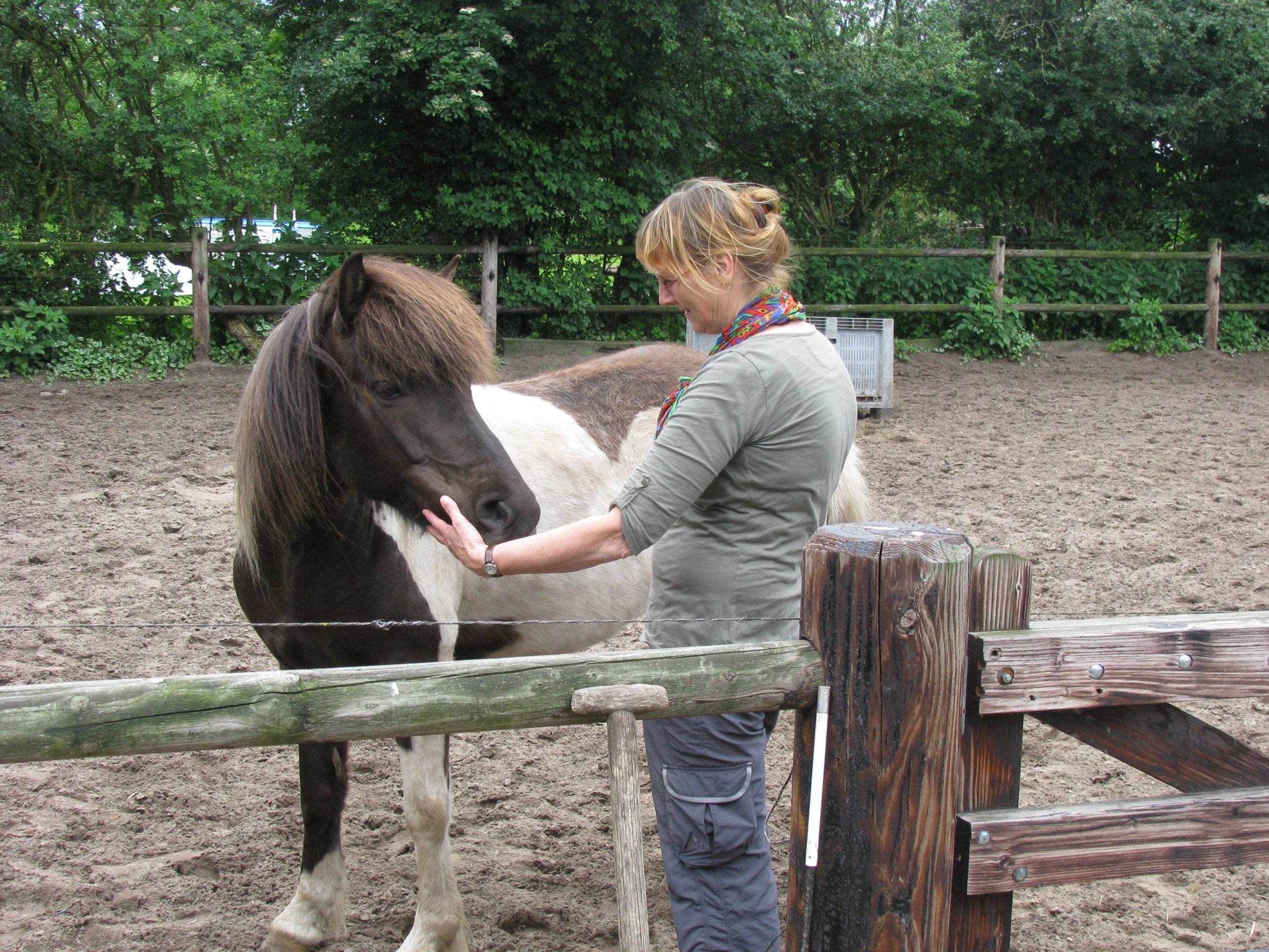 persoonlijke ontwikkeling paarden