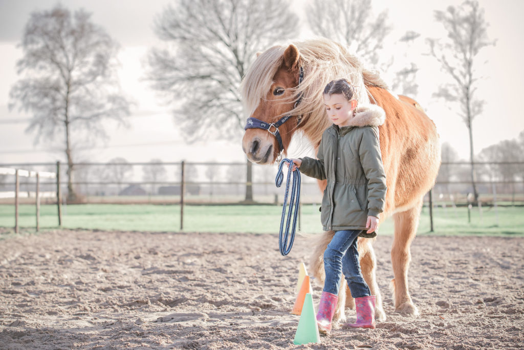 privé sessie paardencoaching